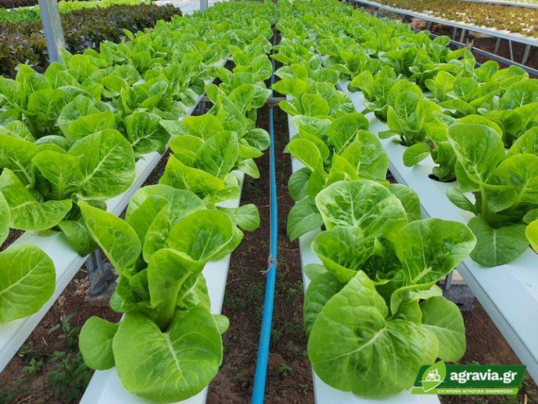 Υδροπονική Καλλιέργεια NFT: Ρηχό Διάλυμα Θρεπτικού Διαλύματος   Agravia