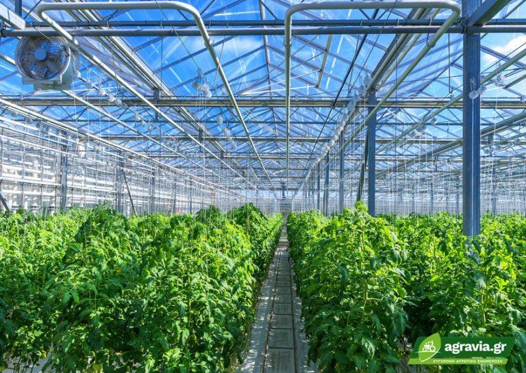 Βλαστικό Παραγωγικό Στάδιο Φυτών Vegetative Versus Generative Growth   Agravia