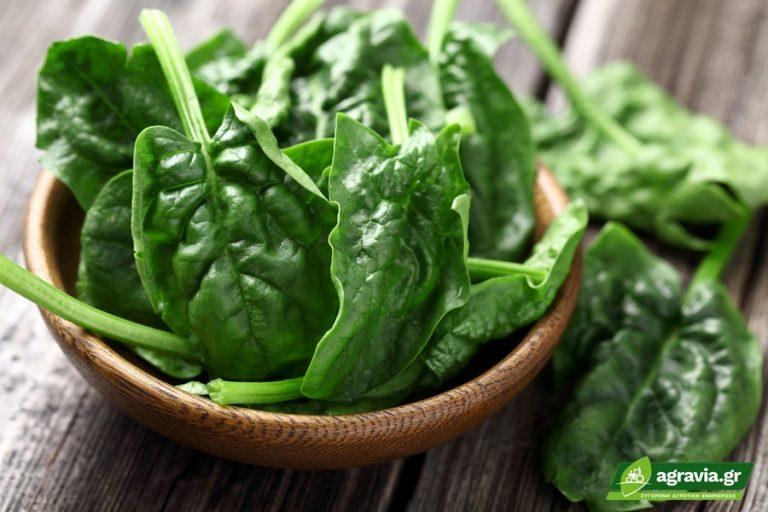 Τροφές με Μαγνήσιο: Οι Πλουσιότερες Τροφές ανά Διατροφική Ομάδα   Agravia