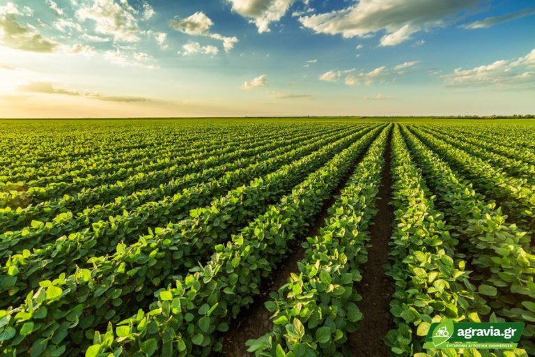 Φασόλια: Λιγότερα Στρέμματα και Αποδόσεις Διαμορφώνουν χρονιά 5ετίας   Agravia